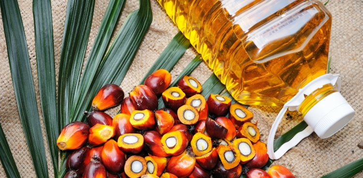 Sustainable Palm Oil: Fact or Fiction? A Look at RSPO Certification